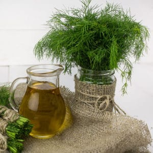 All About Growing Dill - Planting, Pruning, & Harvesting