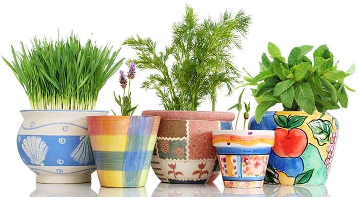 Herb Garden Gift Sets & Ideas - Better Gardener\'s Guide