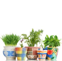 Herb Garden Gift Sets & Ideas