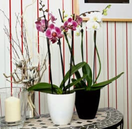 The Best Orchid Pots & Containers for Repotting Orchids