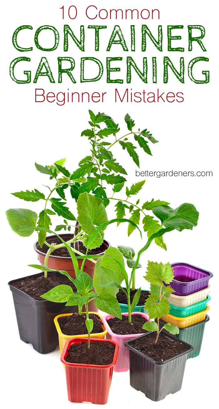 10 Common Container Gardening Mistakes Beginners Make