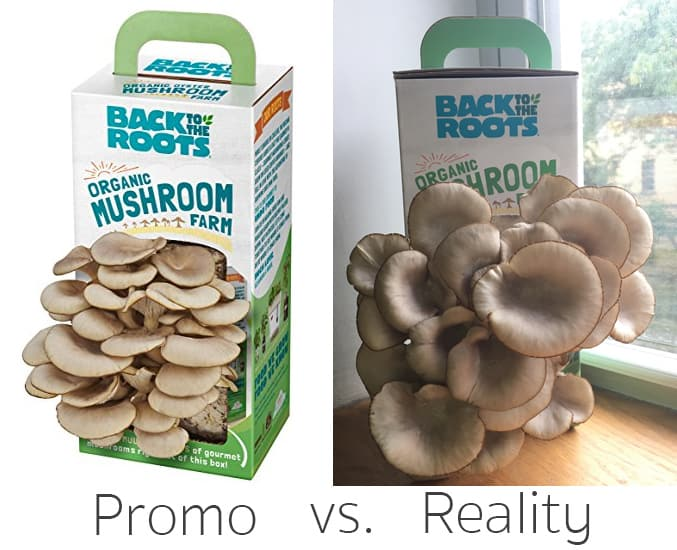 Back to the Roots Mushroom Farm Comparison