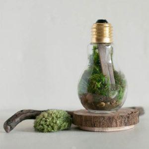 DIY Light Bulb Terrarium Kit Gift