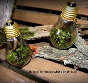 Light Bulb Terrarium Unusual Gifts for Gardeners