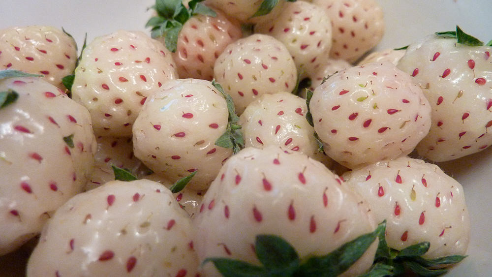 White Pineberry - Weird Fruits