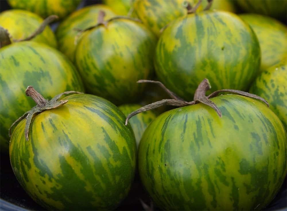 Green Zebra Tomato - Stop Garden Theft