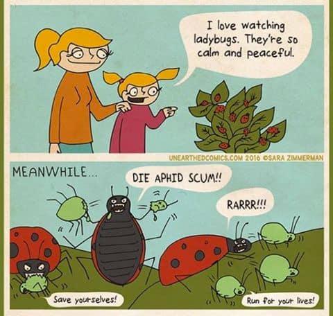 Ladybug Garden Jokes