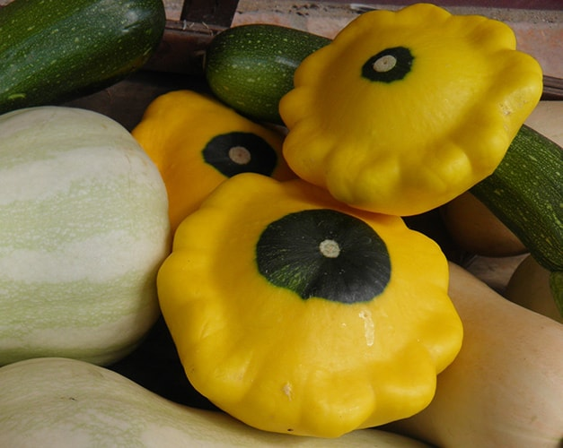 Patty Pan Squash - Weird Veggies for Community Garden Plots