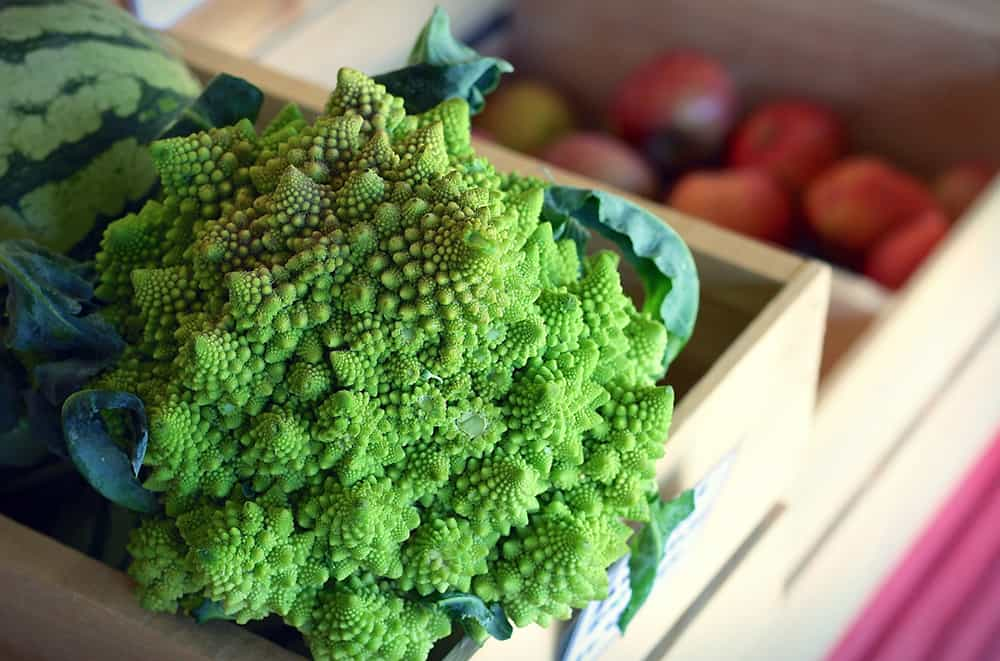 Romanesco Broccoli Unique Veggie to Avoid Garden Theft