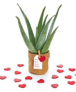 Valentine's Day Aloe You Very Much Gift