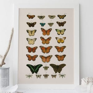 Vintage Butterfly Nature Prints