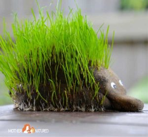 DIY Animal Grass Heads Kids Gardening Project