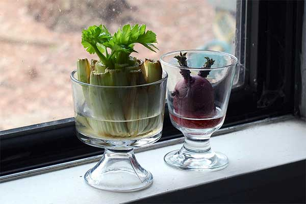 Grow Veggies from Kitchen Scraps