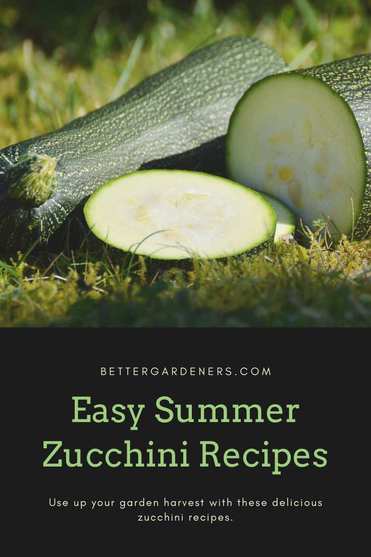 10 Best Zucchini Recipes for Your Garden Harvest