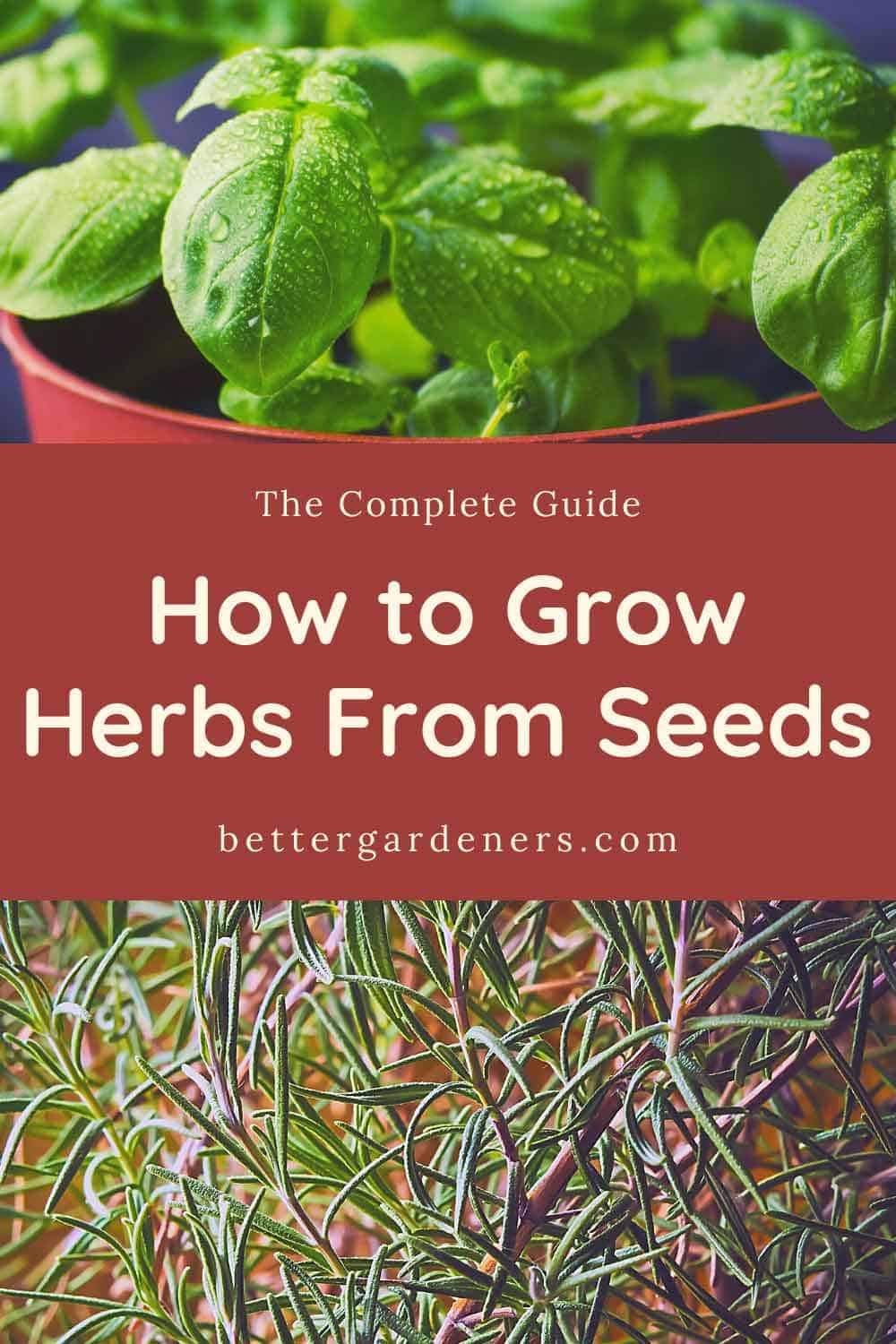 How to Grow Herbs from Seeds - Complete Beginners Guide